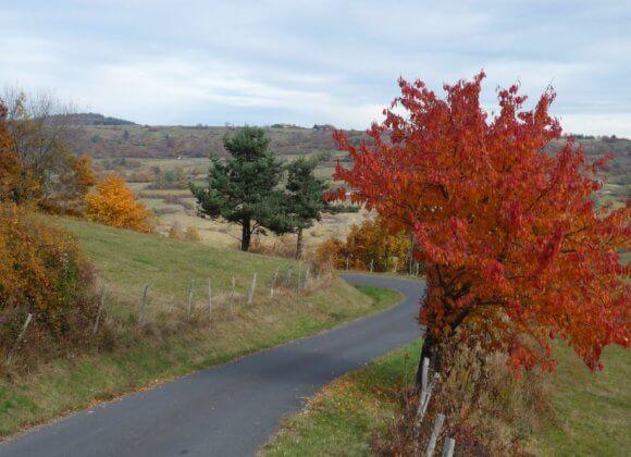 Route menant à Bessoles à l'automne